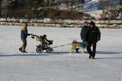 Alpsee im Winter 13