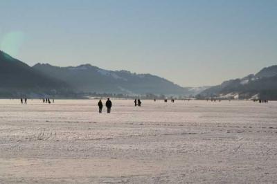 Alpsee im Winter 16