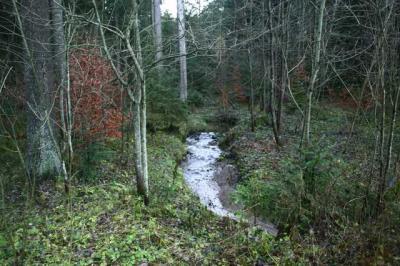Diepolz Kuhnigundenweg 31