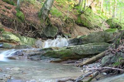 Gruentenwasserall Wildbach 11