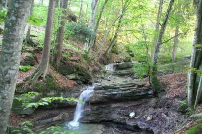 Gruentenwasserall Wildbach 8
