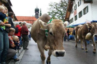 Viescheid Kranzegg 14