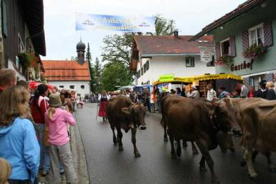 Viescheid Kranzegg 23