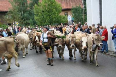 Viescheid Kranzegg 31